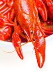 Boiled Crayfish. A closeup of a boiled crayfish on a white background Royalty Free Stock Photos