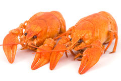 Boiled crayfish Royalty Free Stock Photos