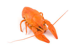 Boiled crayfish Stock Photos