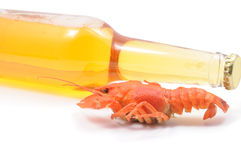 Boiled crayfish and beer bottle Royalty Free Stock Photos