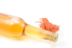 Boiled crayfish and beer bottle Stock Photos