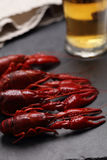 Boiled crayfish and beer Stock Image