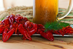 Boiled crayfish and beer Royalty Free Stock Photo