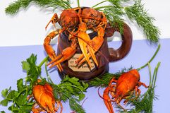 Boiled crayfish beer snack. .. Stock Images