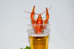 Boiled crayfish beer snack. .. Royalty Free Stock Photo