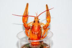 Boiled crayfish beer snack. .. Stock Photography