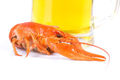 Boiled crayfish and beer Royalty Free Stock Image