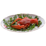 Boiled crayfish closeup. Stock Photo