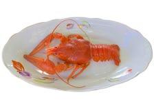 Boiled crayfish closeup. Royalty Free Stock Photo