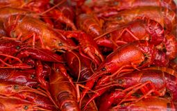 Boiled crayfish food background Stock Photos