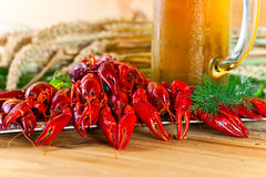 Boiled crayfish Stock Photography