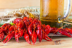 Boiled crayfish Royalty Free Stock Photo