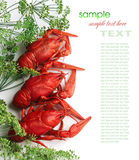 Boiled crayfish with dill. On a white background Royalty Free Stock Image