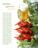 Boiled crayfish with dill Stock Photography