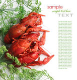 Boiled crayfish with dill Royalty Free Stock Image