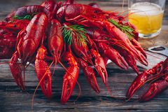Boiled crayfish with dill and beer Stock Photos