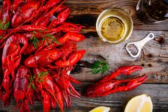 Boiled crayfish with dill and beer Royalty Free Stock Photography