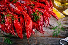Boiled crayfish with dill and beer. On wooden background stock images