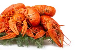 Boiled crayfish with dill isolated on white royalty free stock images
