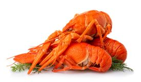 Boiled crayfish with dill isolated on white stock image