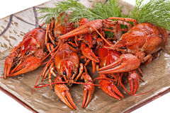 Boiled  crayfish with dill  on the plate. Royalty Free Stock Image