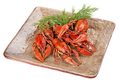 Boiled  crayfish with dill  on the plate. Royalty Free Stock Photos