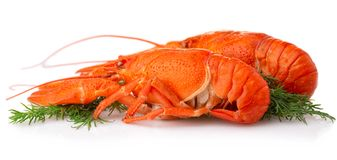 Boiled crayfish with dill  on white Royalty Free Stock Photo