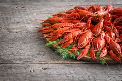 Boiled crayfish with dill. royalty free stock photos