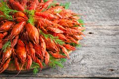 Boiled crayfish with dill. royalty free stock images