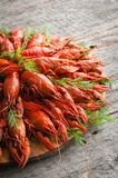 Boiled crayfish with dill. stock image