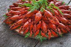 Boiled crayfish with dill. stock photography
