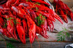 Boiled crayfish with dill Stock Image
