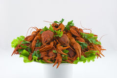 Boiled crayfish on a dish Royalty Free Stock Photo