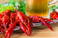 Boiled crayfish Royalty Free Stock Images