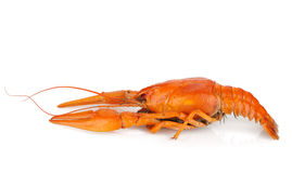 Boiled crayfish Royalty Free Stock Photography