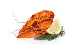 Boiled crayfish with lemon slice and dill Royalty Free Stock Images