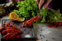 Boiled crayfish lie on a platter.Female hand holding tweezers and puts cancers. Fresh salad. Nutritious and delicious. Boiled crayfish lie on a platter. Female stock photography