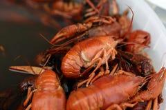 Boiled crayfish Royalty Free Stock Image