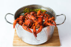 Boiled crayfish in pan Royalty Free Stock Image