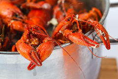 Boiled crayfish in pan Stock Image
