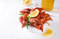Boiled crayfish in the plate with beer Royalty Free Stock Images