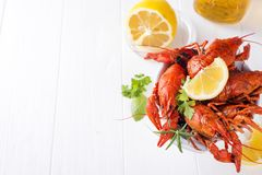 Boiled crayfish in the plate with beer Stock Photography