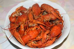 Boiled crayfish on a plate.  royalty free stock images