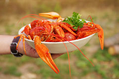 Boiled crayfish in a plate Royalty Free Stock Image