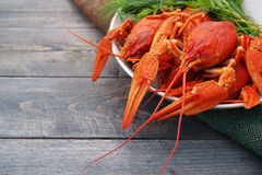 Boiled crayfish in a plate with parsley greens Stock Image