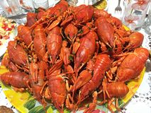 Boiled crayfish on an red plate. Hot Boiled Crawfish. Cooked delicious food gourmet lunch meal background beer dinner healthy seafood shell shellfish snack royalty free stock photos
