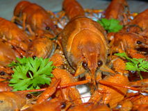 Boiled crayfish. Some boiled crayfish with green parsley closeup Stock Photo