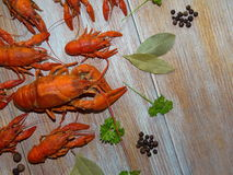 Boiled crayfish. Some boiled crayfish with green parsley lying on the wooden boards Stock Photo