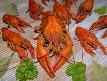 Boiled crayfish. Some boiled crayfish with green parsley lying on the wooden boards Royalty Free Stock Photo