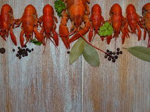 Boiled crayfish. Some boiled crayfish with green parsley lying on the wooden boards Stock Images